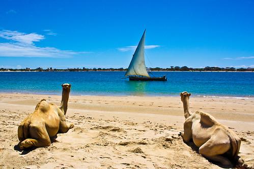 Lamu Island Kenya Picture : Kenya