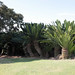 Small photo of Modjadji Royal Kraal, Limpopo, South Africa
