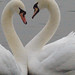 Small photo of Pair of Swans