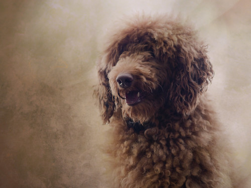 I would rather see the portrait of a dog that I know, than all the allegorical paintings they can show me in the world.