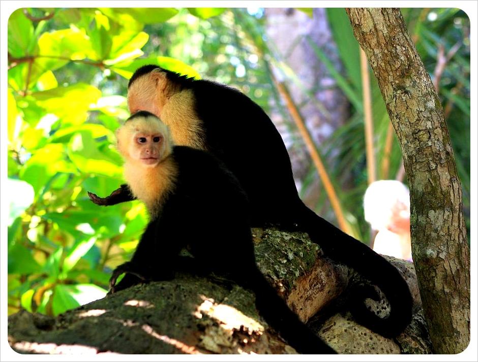 Monkey friends in Manuel Antonio