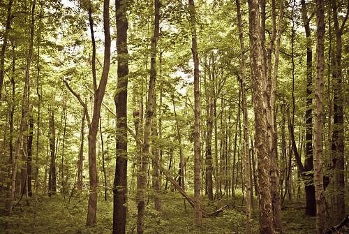 trees usa forest indiana naturereserve quarry naturepark greencastle putnamcounty