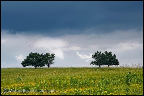 tree green field grass clouds virginia bigmeadows skylinedrive shenandoahnationalpark