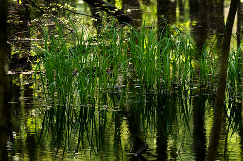 mountain green al oak huntsville bluff wetland greenspace subdivision greenmountain oakbluff blufflot