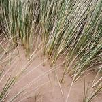 Dune-Detail