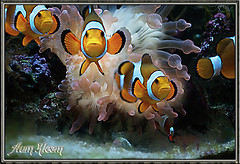Little Nemos