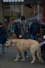 animal sports(0.0), hound(0.0), sports(0.0), street dog(0.0), conformation show(0.0), dog sports(1.0), animal(1.0), dog(1.0), pet(1.0), mammal(1.0), irish wolfhound(1.0),