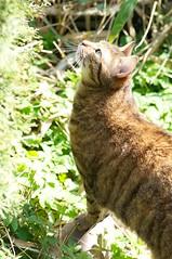 17.4.11 gespannte Katze