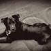 black dawg by dogfaceboy