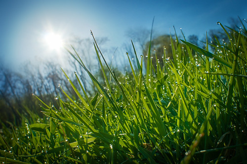 blue sun green water grass sunrise drops sony dew hdr nex project365 ourdailychallenge nex5 odc3