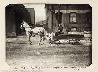 Topaz', dappled grey mare, Clayton's meat market, Toronto