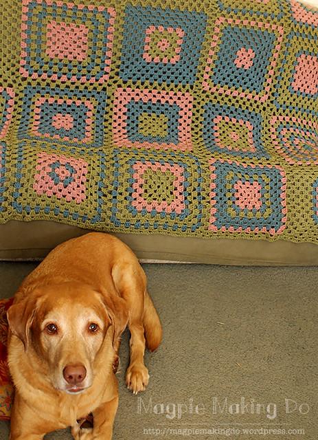 Dog with afghan