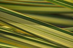 plants 015