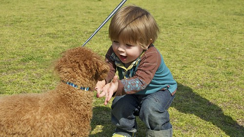 how to train a dog to protect children
