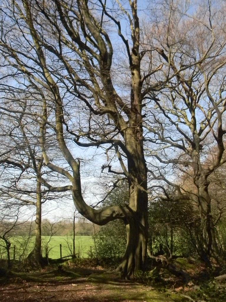 Odd tree Oxted Circular