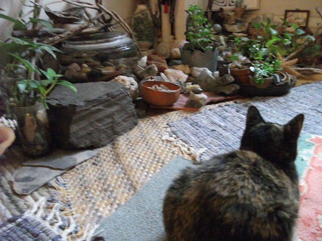 Tortoise cat the indoor rock gardens flickr photo for Indoor gardening with cats