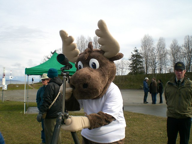 Jerry the Moose travels BC