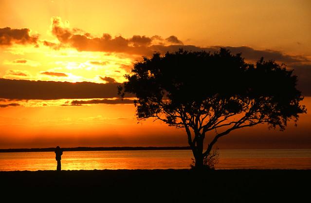 Flamingo Sunrise: Cottonwood Tree at Everglades Bay