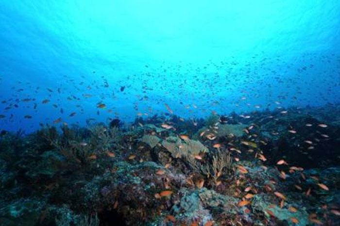 海洋提供我們生活所需的資源,但GDP計算範圍並不包括自然資源。