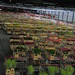 Small photo of Aalsmeer flower auction