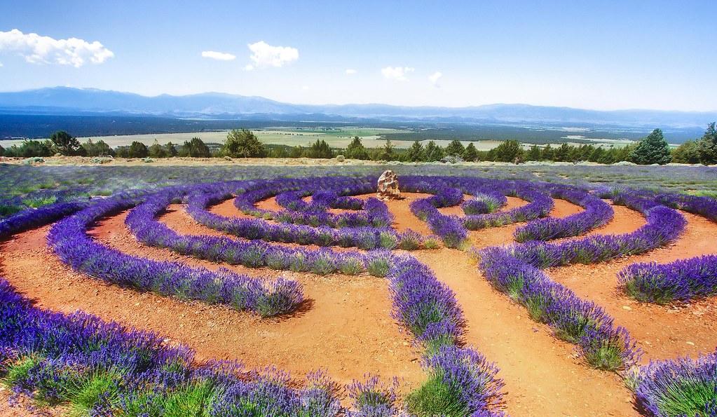 Lavender_Labyth