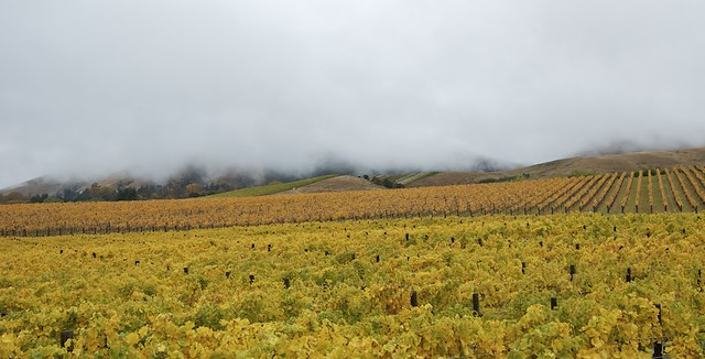 Autumn/Fall in the vineyard