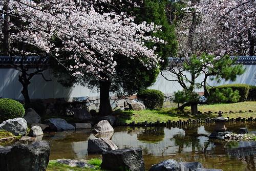 Nagoya Castle Sakura 083r