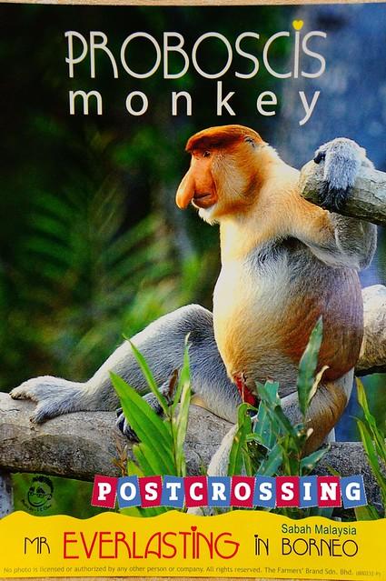 Sabah - Proboscis Monkey V3