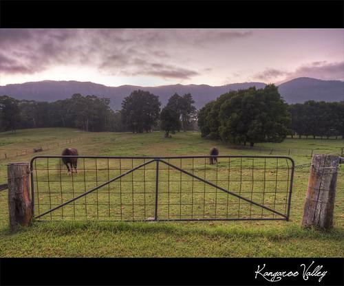 horses sunrise hdr paddock kangaroovalley