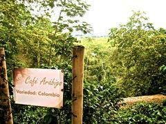Café Arabigo