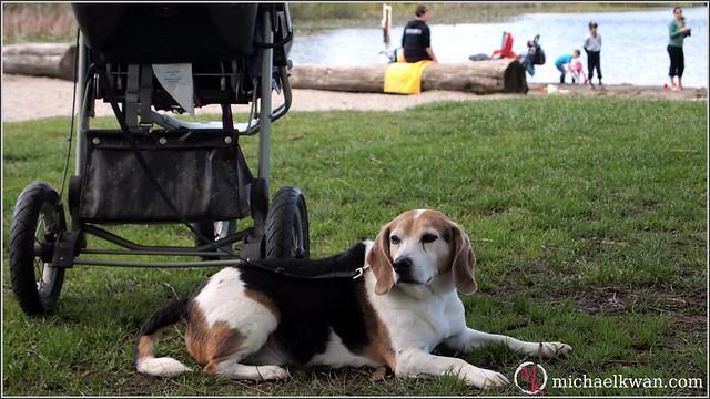 Vancouver Area Dog Friendly Parks