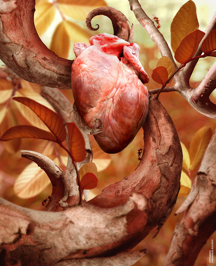 Heart of the Nature / El corazón de la Naturaleza