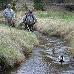 Electrofishing in Rocky Mountain National Park