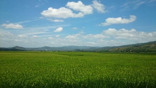 philippines laguna ricefield pangil flickrandroidapp:filter=none