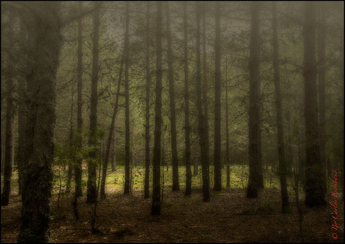 Bosque encantado, Cuenca_DSC5927