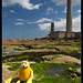 Small photo of Flat Eric au phare de Gatteville