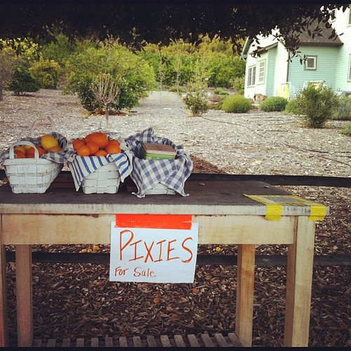 109/366 :: pixies for sale