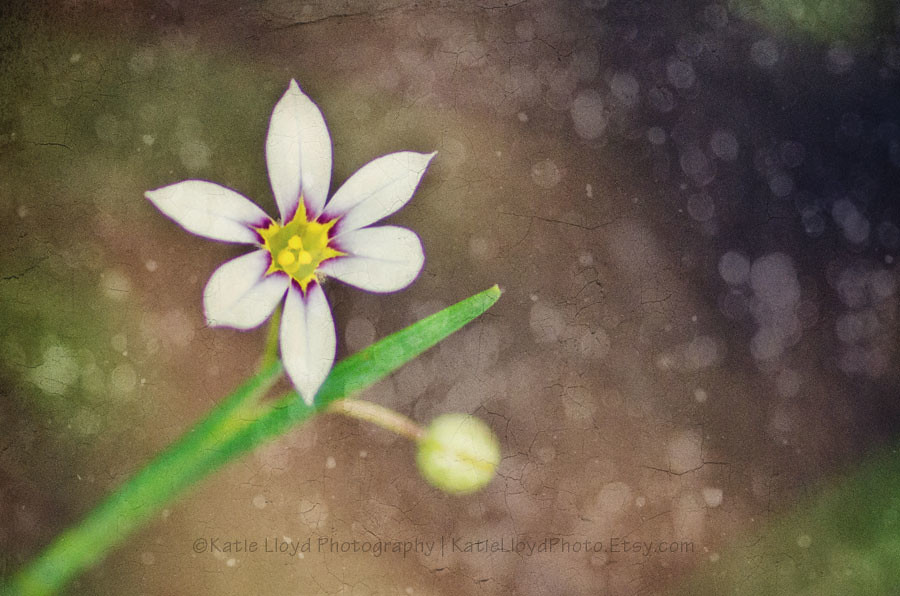 4-12-12---wildflower