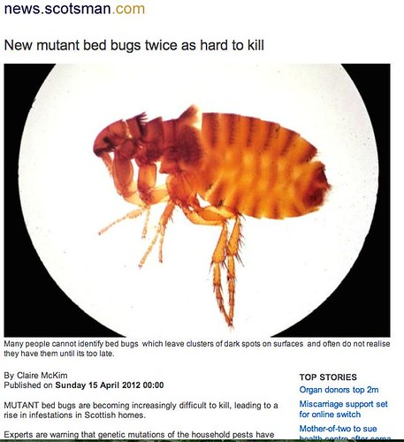 """New Mutant Bed Bugs twice as hard to kill"""