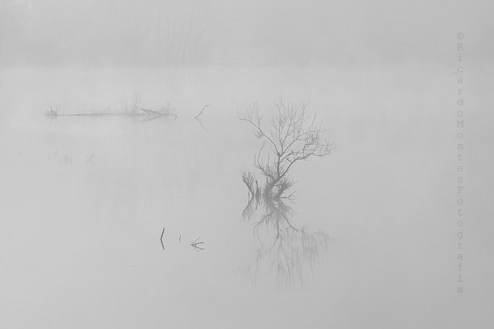 Amanece con niebla en el pantano.