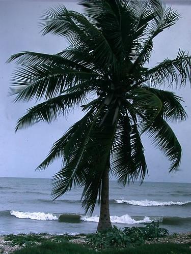 Caribbean Beach near Ponce