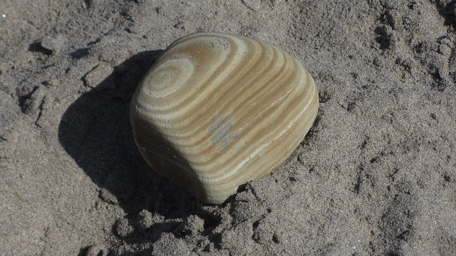 IMG_0505 layered sandstone