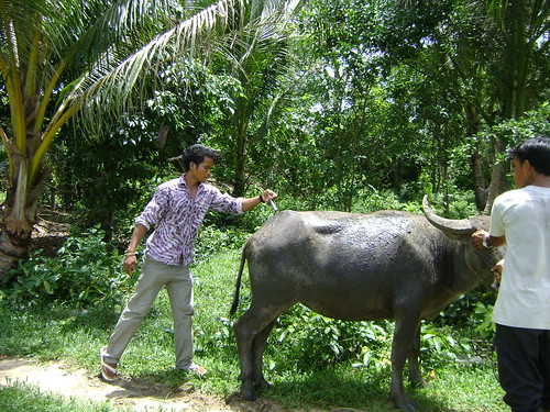 02 Vets vaccinate a buffalo in Botum Sakor