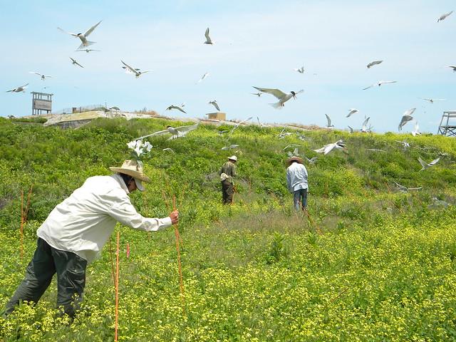 Great Gull Island Ny
