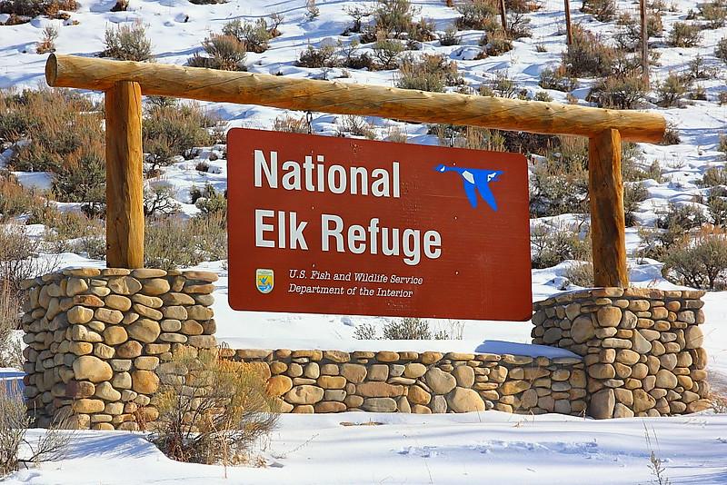 IMG_9372 National Elk Refuge