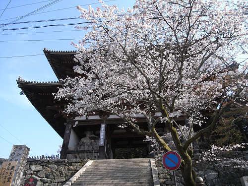 吉野の桜2011@吉野山-31