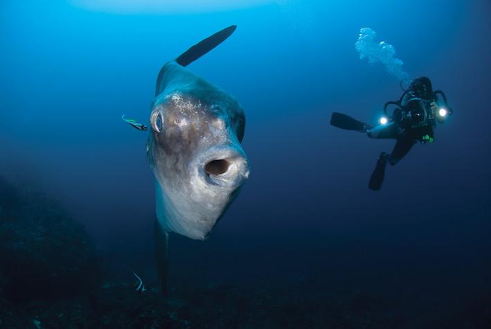 Buceo en el Indopacífico