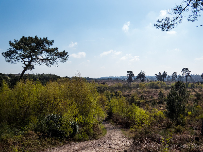 Our path across Canford Heath this morning
