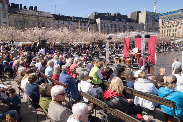 sakura in stockholm 05