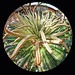 Sago Palm Tentacles by baldheretic